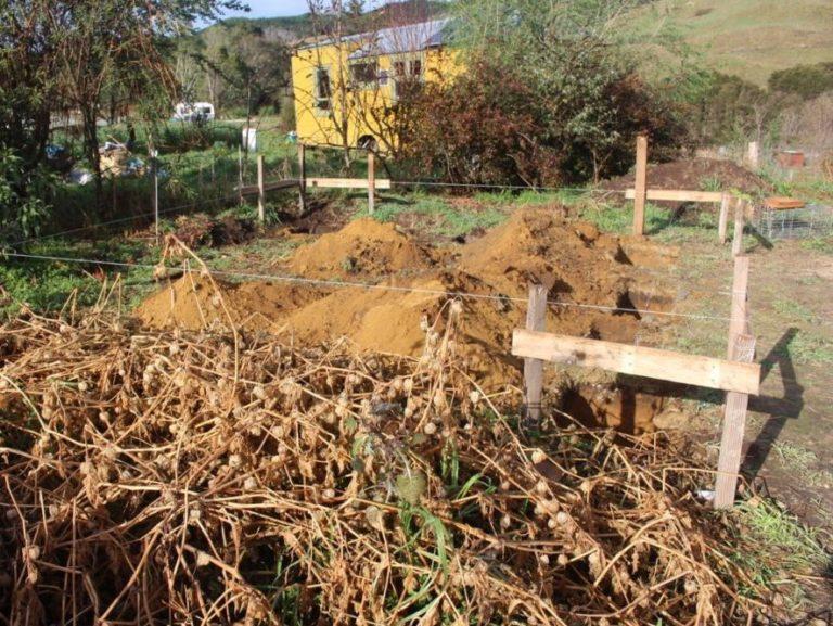 hier wird sogleich ein Garten- und Gewächshäuschen in ökologischer Bauweise   entstehen